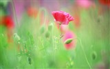 Title:Soft Focus Photography - Romantic Flowers dim 09 Views:10471