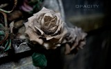 Title:Withered Rose La Crypte des Fleurs The Forgotten beauty Views:2638