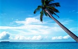 Title:blue sky in the palm tree wallpaper Views:87102