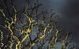 Title:branches under the yellow light wallpaper Views:5795