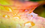 Title:drops of water and leaves wallpaper Views:6223