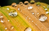 Title:drops of water on leaves wallpaper Views:8696