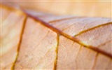 Title:dry leaves wallpaper Views:8113