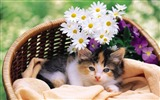 Title:flowers in a small cat Views:13420