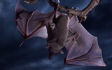Title:upside down bat wallpaper Views:9398