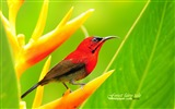 Title:Woods elf - Spring cute bird wallpaper - first series Views:7718