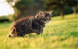 Title:12 Fluffy Baby Kittens on Grass Views:5286