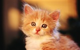 Title:4 Charming Fluffy Baby Kitten Views:5093