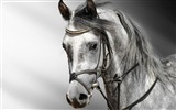 Title:Horse Photography-wallpaper Album-second series 05 Views:22491