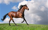 Title:Horse Photography-wallpaper Album-second series 08 Views:15394