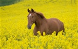 Title:Horse Photography-wallpaper Album-second series 09 Views:5895