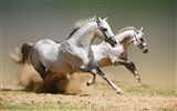 Title:Horse Photography - Wallpaper Album Views:15055