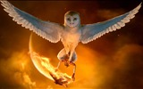 Title:Legend of the Guardians-The Owls of GaHoole movie wallpaper 01 Views:15232