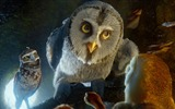 Title:Legend of the Guardians-The Owls of GaHoole movie wallpaper 10 Views:3759