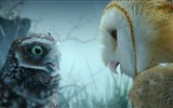 Title:Legend of the Guardians-The Owls of GaHoole movie wallpaper 11 Views:5692