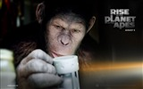 Title:Rise of the Planet of the Apes movie wallpaper 04 Views:3869