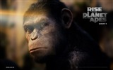 Title:Rise of the Planet of the Apes movie wallpaper 05 Views:4175