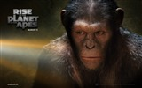 Title:Rise of the Planet of the Apes movie wallpaper 06 Views:3601