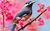 Title:Woods wizard Spring cute bird wallpaper Views:60484