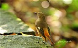 Title:forest birds-spring cute bird wallpaper Views:26408