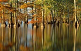 Title:Autumn trees in water- Autumn Landscape wallpaper Views:9974