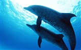 Title:Dolphins Under The Sea-Animal World Series Wallpaper Views:11551