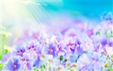 Title:Seasonal flowers - flowers wallpaper Views:8720