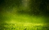 Title:Green Raindrops-Amazing nature Views:11880