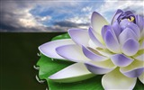 Title:Purple Lotus-September flowers wallpaper Views:20610