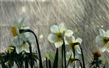 Title:Rain Orchid-Summer romance Feelings Views:6345