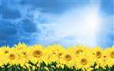 Title:Sunshine sunflower-Summer romance Feelings Views:9120