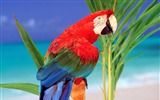 Title:Tropical Colors Parrot-Animal World Series Wallpaper Views:5341