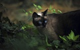 Title:Black Cat with Blue Eyes-Cute little kitty cat living wallpaper Views:19384