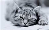 Title:Cat Black and White-Cute little kitty cat living wallpaper Views:21605