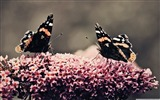 Title:Dance - beautiful butterfly - Desktop Wallpaper Album Views:9286