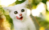 Title:Just Finished Snack-Cute little kitty cat living wallpaper Views:28139