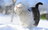 Title:Kitty cat in snow-Cute little kitty cat living wallpaper Views:43794