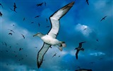 Title:Seagull flying over-Animal Desktop Wallpaper selected Views:5641