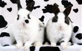Title:Spotted Rabbits-Animal Desktop Wallpaper selected Views:5240