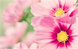 Title:Fresh and natural flowers Desktop Wallpapers Views:16015