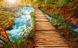 Title:Stream path-Nature Desktop Wallpaper Views:5724