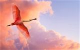 Title:Free to fly - birds Desktop Wallpapers Views:9644