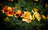 Title:four flowers-Colorful-Flowers Wallpaper Photo Views:4836