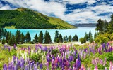 Title:lavender mountains-Nature Desktop Wallpaper Views:10020