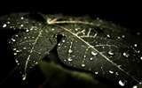 Title:leafy droplets-Macro Photography Photo Series wallpaper Views:5560