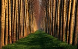 Title:path lined with trees-Nature Desktop Wallpaper Views:5068