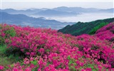 Title:pink wildflowers-Nature Desktop Wallpaper Views:11859