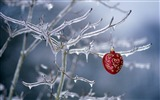 Title:Frozen on the Christmas tree decoration wallpaper Views:6503