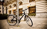 Title:bicycle city-the city landscape photography wallpaper Views:4861