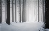 Title:forest winter-winter theme desktop wallpaper Views:10115